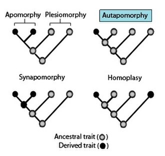 Autapomorphy - Phylogenies showing the terminology used to describe different patterns of ancestral and derived character or trait states.