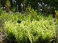 Auteuil-Fern garden 04.JPG