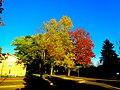 Autumn Colors in Madison - panoramio.jpg