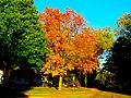 Autumn Colors in Madison - panoramio (1).jpg