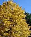 Autumn Contrast (2857270316).jpg