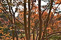 Autumn In Nara Park (184715447).jpeg