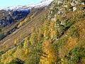 Autumn colour at Srathfarrar - geograph.org.uk - 1029364.jpg