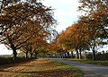 Autumn time along Kings Avenue, Sandringham. - geograph.org.uk - 150584.jpg