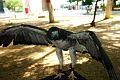 Aves en Venezuela.jpg