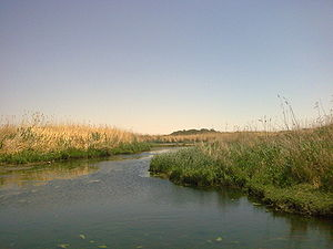 Zarqa Governorate - The wetlands in Azraq