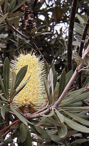 Vitesse datant NSW Australie