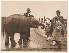 Baby elephant, Taronga Zoo, ca. 1925-ca. 1945 - by Sam Hood (3210637575).jpg