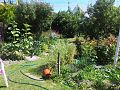 Backyard Garden, Christchurch, NZ.jpg