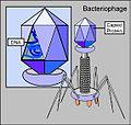 Bacteriófago.jpg