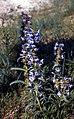 Badlands Flowers- Red, Pink, Blue (5020a8f7-f9af-4ea0-821e-d0cb7fc415c3).jpg
