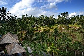 Tegallalang - Image: Bali – Rice terrace (2688147280)