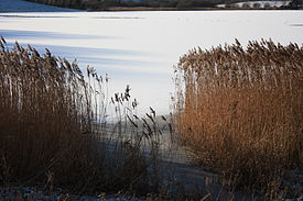 Ballydugan Lake (02), January 2010.JPG