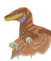 Bambiraptor reconstruction.png