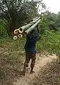 Bamboo cutter.jpg