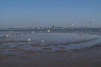 Bandada de aves. Doñana.jpg