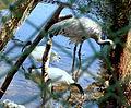 Bangabandhu Safari Park Cox's Bazar 10.JPG