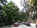 Bangalore Sanjay nagar street trees 1.jpg