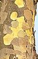 Bark (8425283185).jpg