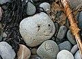 Beach pebble - geograph.org.uk - 976813.jpg