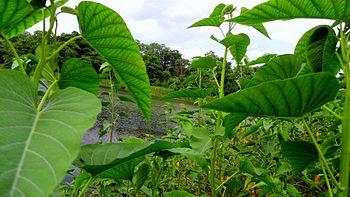 Beautiful herb of plants.jpg