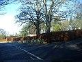Beech Hedge - geograph.org.uk - 1127275.jpg