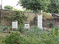 Beehives at Chelsea Physic Garden - geograph.org.uk - 1429836.jpg