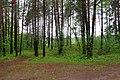Belarus, Naroch - panoramio (9).jpg