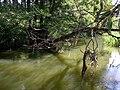 Belarus-Viliya River-5.jpg