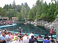 Beluga whales, Vancouver Aquarium, 2013.jpg