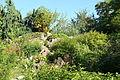 Bergianska trädgården - Stockholm, Sweden - DSC00496.JPG