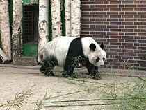 Berliner Zoo Bao-Bao 1.JPG