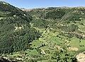 Betula pendula - Birch forest, Giresun 01.jpg