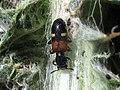 Bicho sobre cardo - Tilloidea transversalis (7527073334).jpg