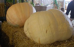 "Big Max - Big Max ""pumpkin"" at a county fair in New York"