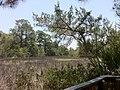 Bike Trail, Jekyll Island, GA - panoramio (4).jpg