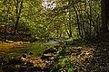 Binolen Naturpark-Sauerland-Rothaargebirge Hoenne.jpg