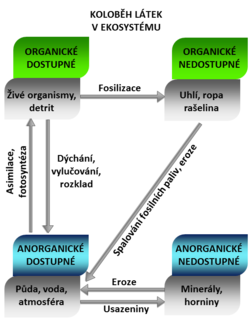 Biochemical cycle flowchart czech.png