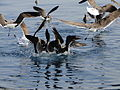 Bird & fish (5166836560).jpg