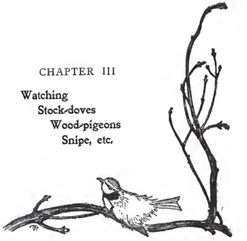 English: Illustration of a tit from Edmund Sel...