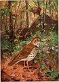 Bird biographies (1923) (20389424201).jpg