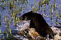 Black Bear Cub.jpg