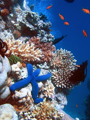 Marine ecosystem - Here, we can see different types of starfish, coral reefs and fishes in the Great Barrier Reef.