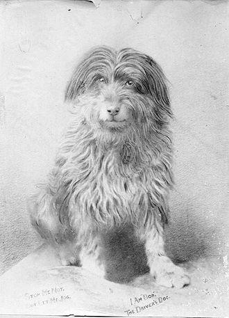 Bob the Railway Dog - Image: Bobthe South Australian Railways Dogweb