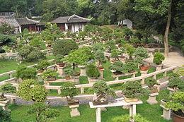 jardines de chinaeditar