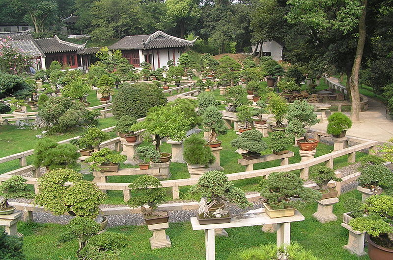 Bonsai forest at the gardens of pagoda Yunyan Ta.jpg