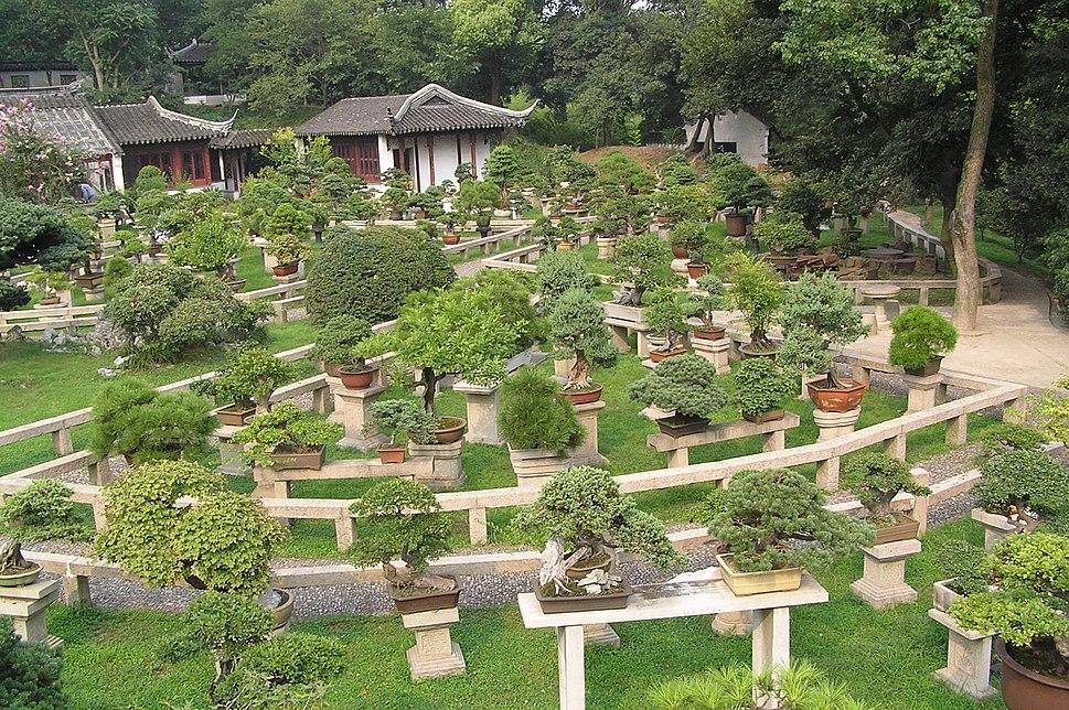 Bonsai forest at the gardens of pagoda Yunyan Ta.jpg