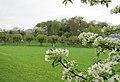 Boomgaard Alden-Biesen - panoramio.jpg