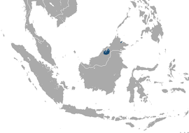 Bornean Pygmy Shrew area.png
