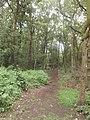 Bosjes van Pex (7).JPG